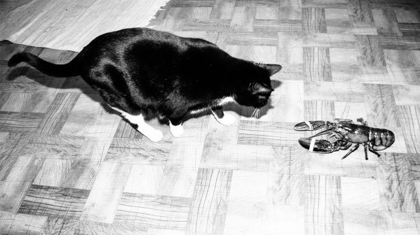 cat and lobster